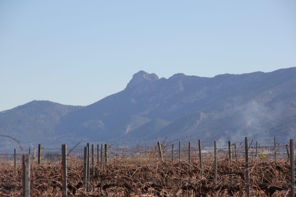 La Vall Blanca: enoturismo en Clariano