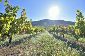 Ruta de paisaje y vino