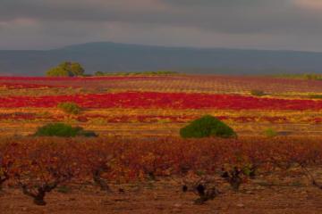 Ruta del Vino DO Valencia: Tour 7 noches