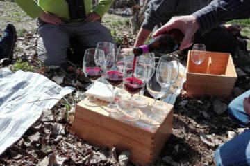 Birds&Wines Mariola – Alforins